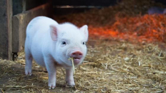 Erde-Schwein-Yin-Jahr 2019 - TCM Ernährung - 5 Elemente - Anna Reschreiter